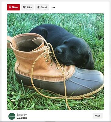 L.L. Bean Pinterest Cross Topics Example