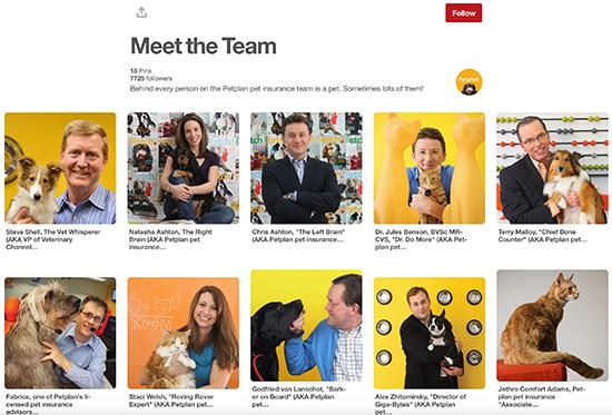 Petplan Pinterest Meet The Team