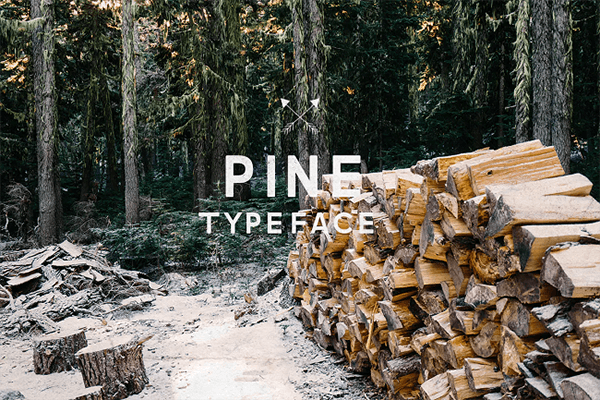 Pine Typeface Monospaced Font
